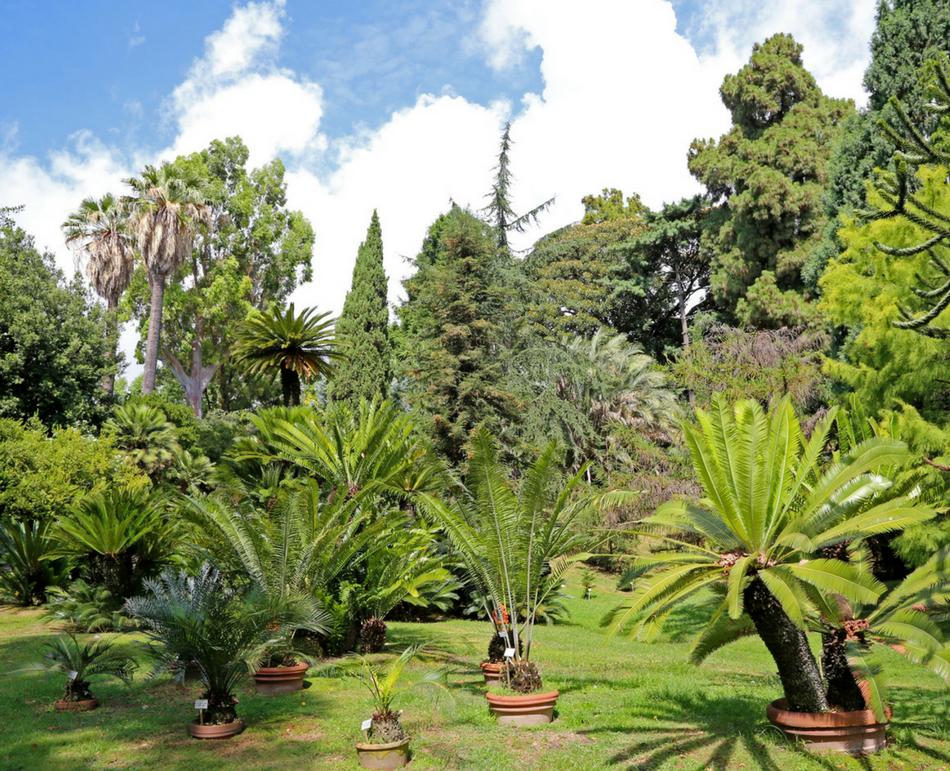 All orto botanico il primo museo tattile ed olfattivo per i non